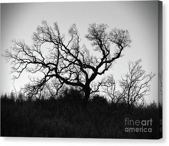 Nightmare Tree Canvas Print