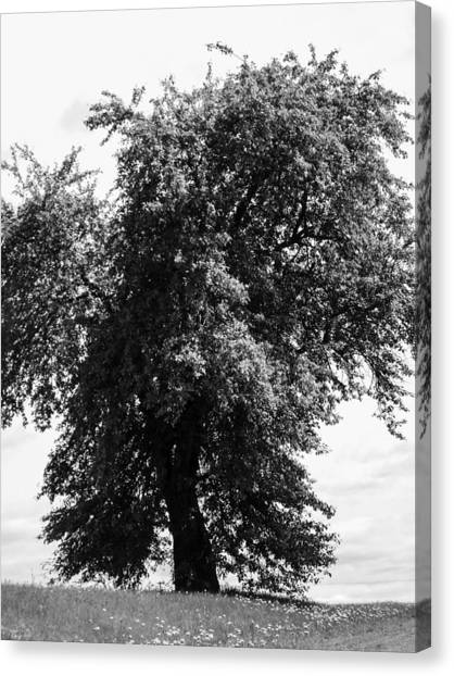 Nina Tree Dressed Out Bw Canvas Print