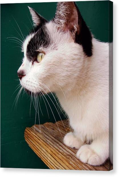Nine Lives Canvas Print by JAMART Photography