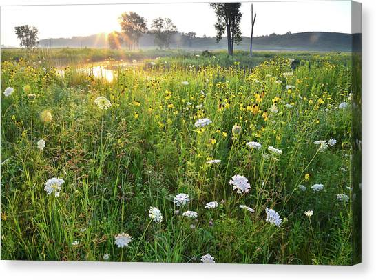 Prairie Sunrises Canvas Print - Nippersink Creek Wildflowers by Ray Mathis