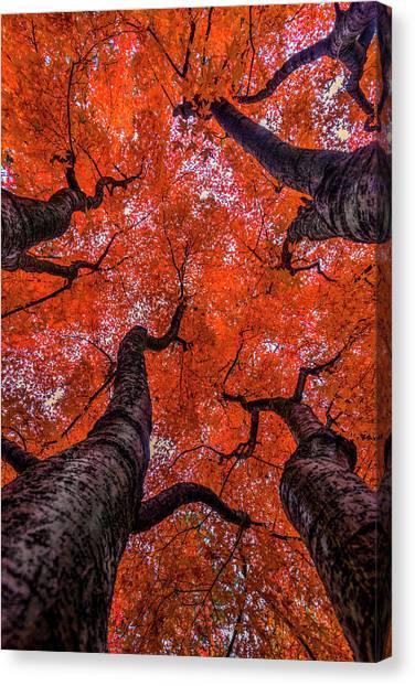 Inland Canvas Print -  Nishinomiya Japanese Garden - Autumn Trees by Mark Kiver