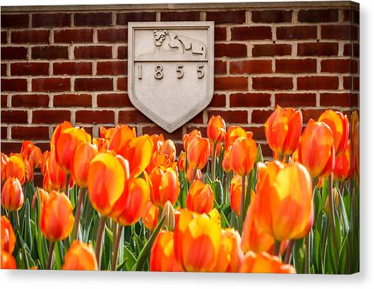 Penn State University Canvas Print - Nittany Tulips by Phillip Schafer