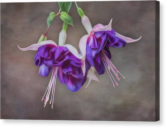 Purple Fuchsia Canvas Print