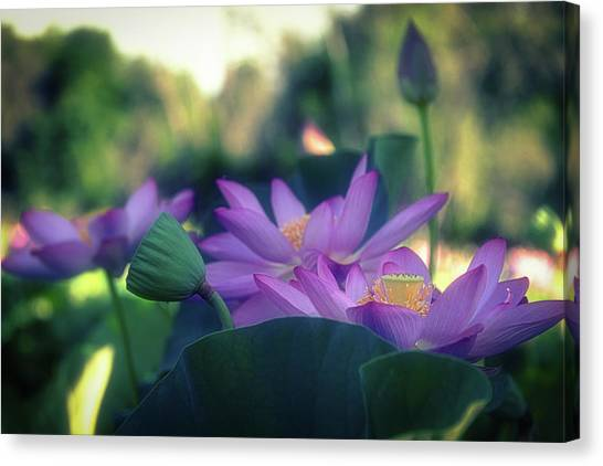 No Mud, No Lotus Canvas Print