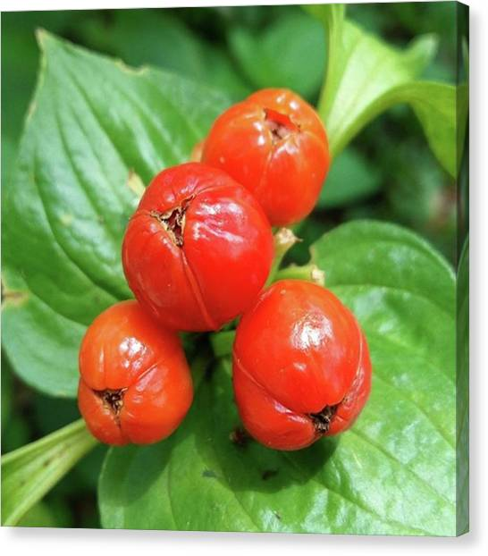 Biology Canvas Print - No Name Fruit #fruit #nicefruit by Wahyu Aprian