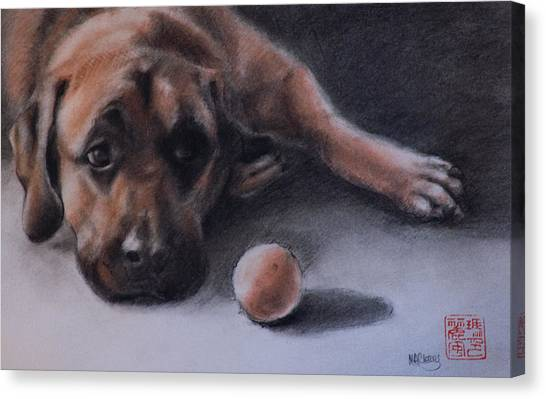 Mastiffs Canvas Print - No Time To Play by MaryAnn Cleary