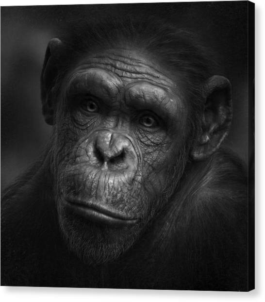 Ape Canvas Print - No Words by Holger Droste