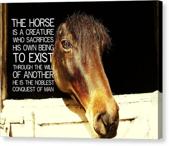 Noble Stallion Quote Canvas Print