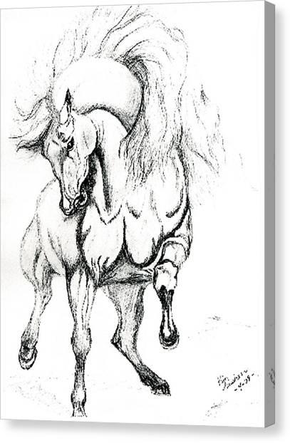 Noble Stallion Canvas Print by Kim Souza