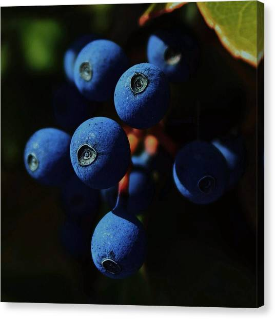 Blueberries Canvas Print - Noon by Amy Neal