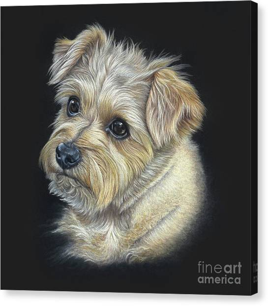 Canvas Print featuring the drawing Norfolk Terrier 'hattie' by Donna Mulley