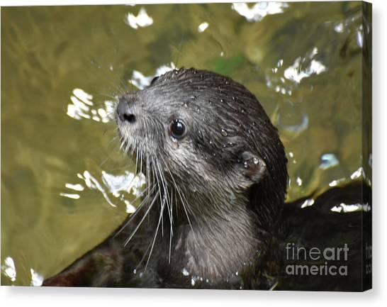 North American River Otter Swimming In A River Canvas Print