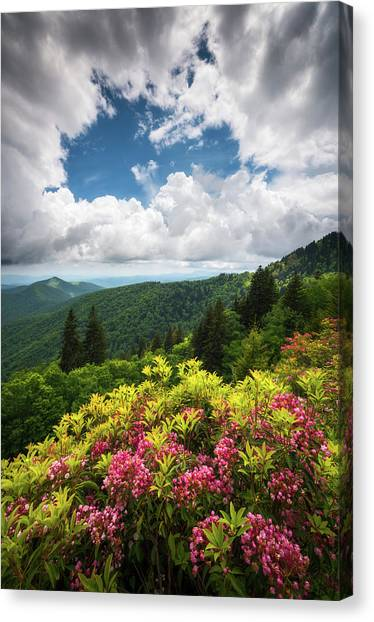Appalachian Mountains Canvas Print - North Carolina Appalachian Mountains Spring Flowers Scenic Landscape by Dave Allen
