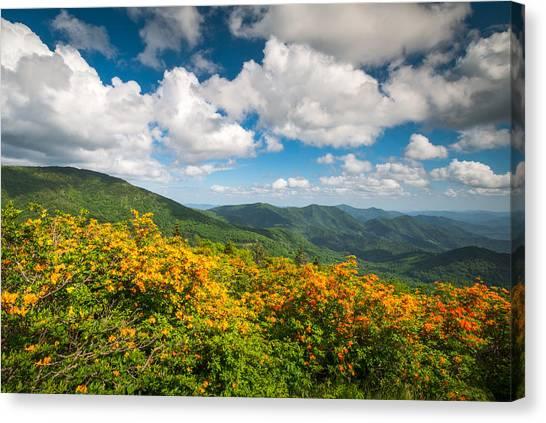 Azaleas Canvas Print - North Carolina Roan Mountain Flame Azalea Flowers Appalachian Trail by Dave Allen
