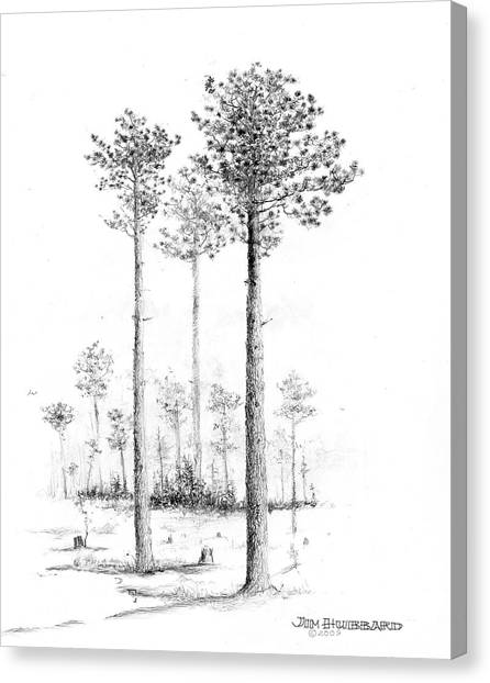 North Carolina- Southern Longleaf Pine Canvas Print