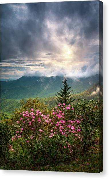 Blue Ridge Parkway Canvas Print - North Carolina Spring Flowers Blue Ridge Parkway Scenic Landscape Asheville Nc by Dave Allen