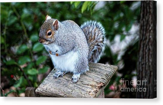 Canvas Print featuring the photograph North Eastern Gray Squirrel by Michael Moriarty