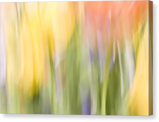North Hills Tulips I Canvas Print