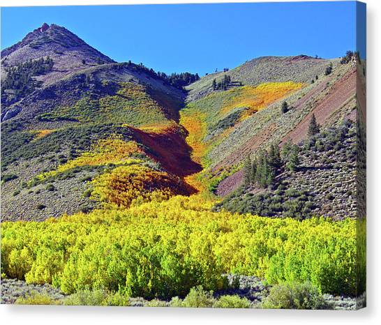 North Lake Aspen Stand Canvas Print