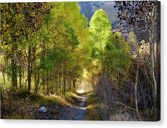 North Lake Aspens 2 Canvas Print