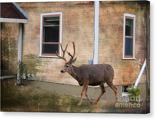 Northern Exposure Photo Paint Canvas Print