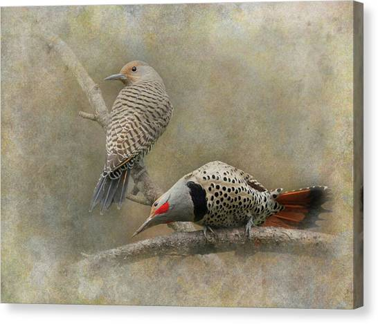 Northern Flicker Canvas Print - Northern Flickers by Angie Vogel