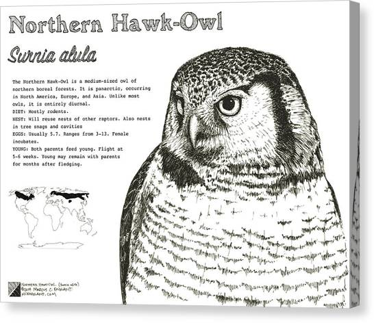 Northern Hawk-owl Infographic Poster Canvas Print