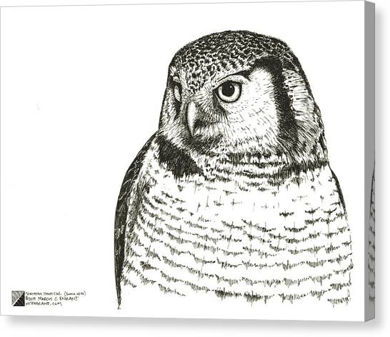 Northern Hawk-owl Canvas Print