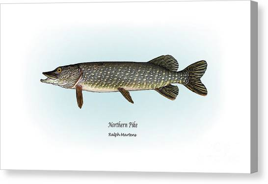 Angling Art Canvas Print - Northern Pike by Ralph Martens