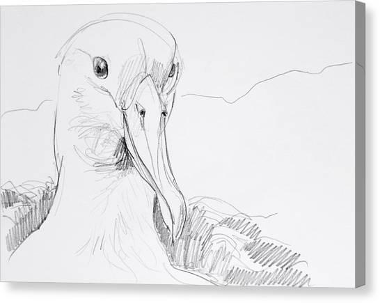 Northern Royal Albatross Canvas Print
