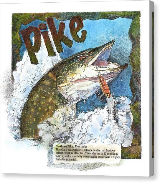 Northerrn Pike Canvas Print