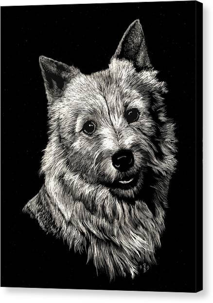 Norwich Terrier Canvas Print