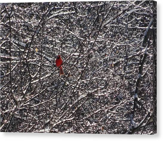 Canvas Print - Not A Cardinal Sin by Mr Cross