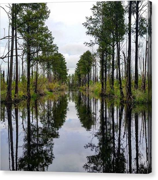 Okefenokee Canvas Print - Not Sure If I'm Loving This Shot Or by Karen Breeze