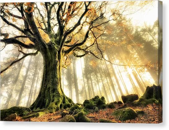 Autumn Leaves Canvas Print - November by Christophe Kiciak