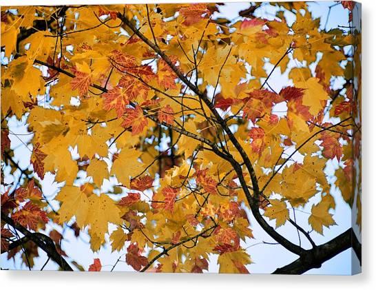 November Twilight Canvas Print by JAMART Photography