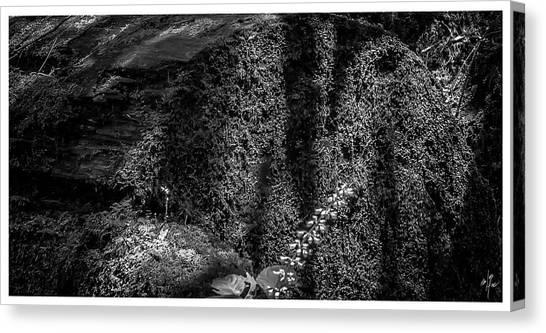 Nuances-horto-parque Estadual-campos Do Jordao-sp Canvas Print
