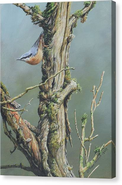 Canvas Print featuring the painting Nuthatch by Alan M Hunt