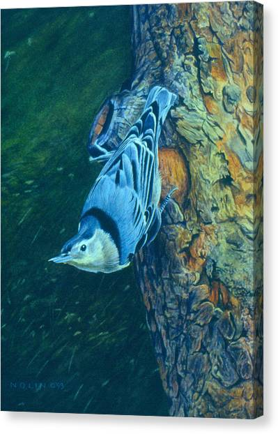 Nuthatch Canvas Print