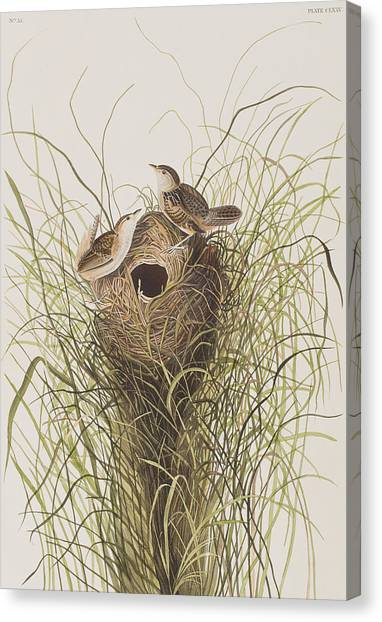 Wrens Canvas Print - Nuttall's Lesser-marsh Wren  by John James Audubon