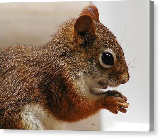 Nutty Guy Canvas Print