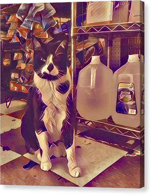 Canvas Print - Nyc Bodega Cat by Gina Callaghan