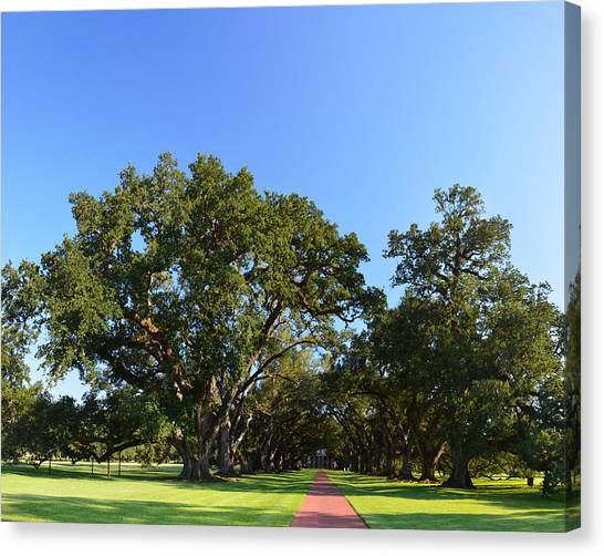 Oak Alley Plantation Panoramic Canvas Print