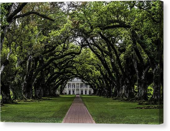 Oak Alley Plantation, Vacherie, Louisiana Canvas Print