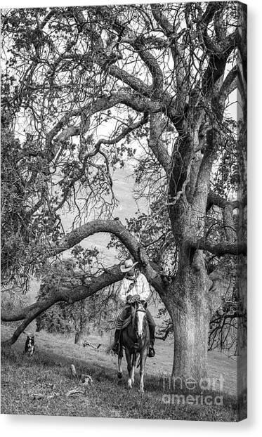 Oak Arches Canvas Print