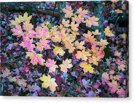 Oak Creek Canyon Fall Colors Canvas Print
