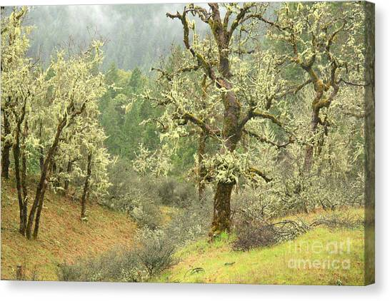 Oak Forest Canvas Print by Frank Townsley