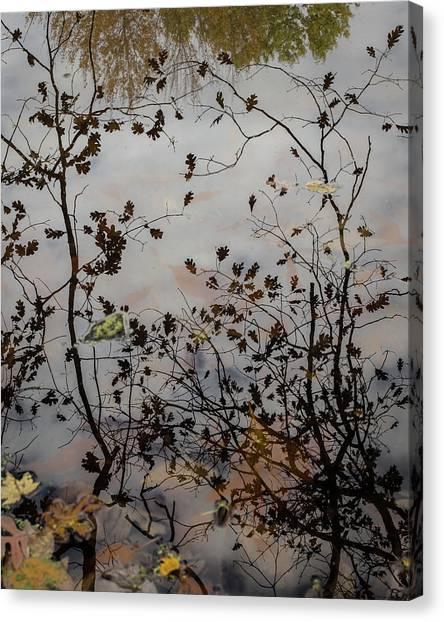 Oak Leaf Reflection At Spirit Springs Canvas Print
