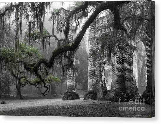 Sacred Canvas Print - Oak Limb At Old Sheldon Church by Scott Hansen