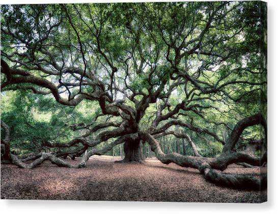 Oak Of The Angels Canvas Print